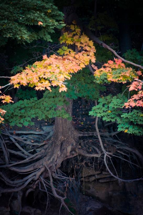 fall 11
